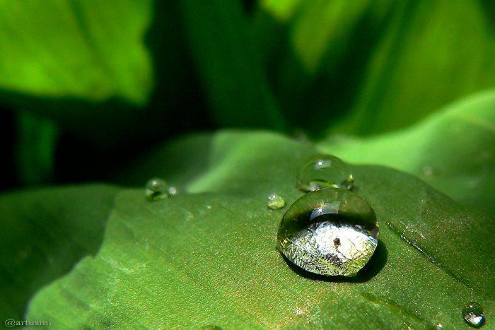 Wassertropfen auf Blatt eines Maiglöckchens (Convallaria majalis) - 15. Mai 2005 um 13:22 Uhr