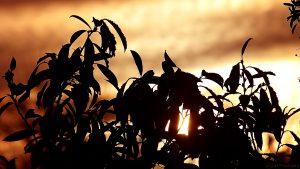 Sonnenaufgang am 20. Januar 2016 um 08:55 Uhr