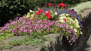 Blumen auf der Bachmauer in Goßmannsdorf am Main - 2. September 2012