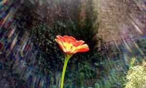 Blume gegen Sonnenlicht fotografiert
