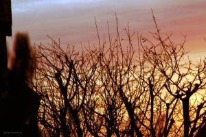 Morgendämmerung am 25.12.2014, 08:29 Uhr