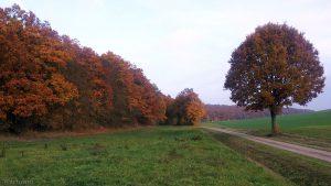 Eisinger Flur im Herbst - 30. Oktober 2015 um 15:11 Uhr