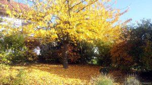 Unser Garten am 31. Oktober 2015 um 14:23 Uhr