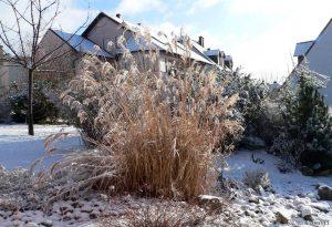 Unser Garten am 23. Januar 2005 um 11:17 Uhr