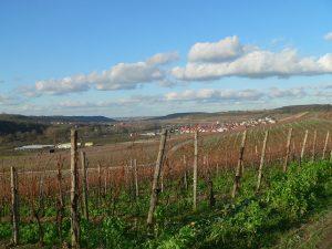 Weinberge bei Sommerhausen im Lkr. Würzburg am 14. Januar 2007 um 14:05 Uhr