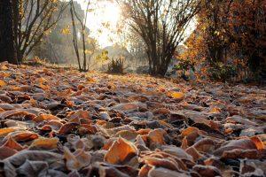 Gefrorenes Laub am 14. November 2011 um 08:51 Uhr