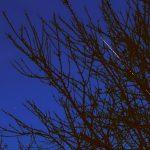 ISS zwischen Zweigen - 22. Februar 2012 um 18:36 Uhr