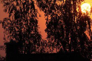 Sonnenuntergang hinter Birken (Betula) am 26. Juli 2012 um 20:39 Uhr