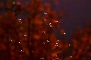 Insektenschwarm am 23. November 2014 um 15:49 Uhr