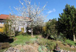Unser Garten am 18. April 2015 um 17:25 Uhr