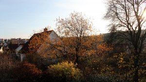 Frühling im Herbst bei 14 °C am 12. November 2015 um 15:24 Uhr