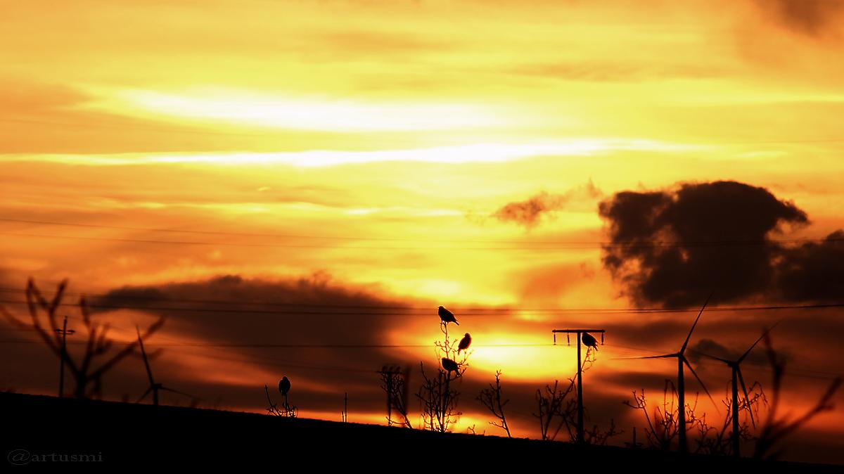 Sonnenanbeter beim Sonnenuntergang am 24. Februar 2016 um 17:46 Uhr