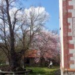 Linde und Sonnenuhr an der Wolfgangskapelle oberhalb von Ochsenfurt am 12. April 2016 um 15:40 Uhr