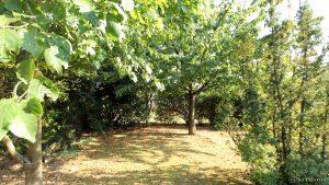 Unser Garten am 11. September 2016 um 17:19 Uhr