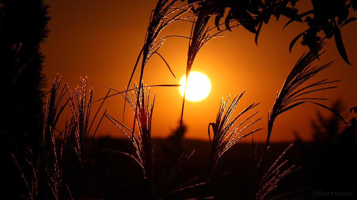 Silberfahnengras und untergehende Sonne am 29. September 2016 um 18:50 Uhr