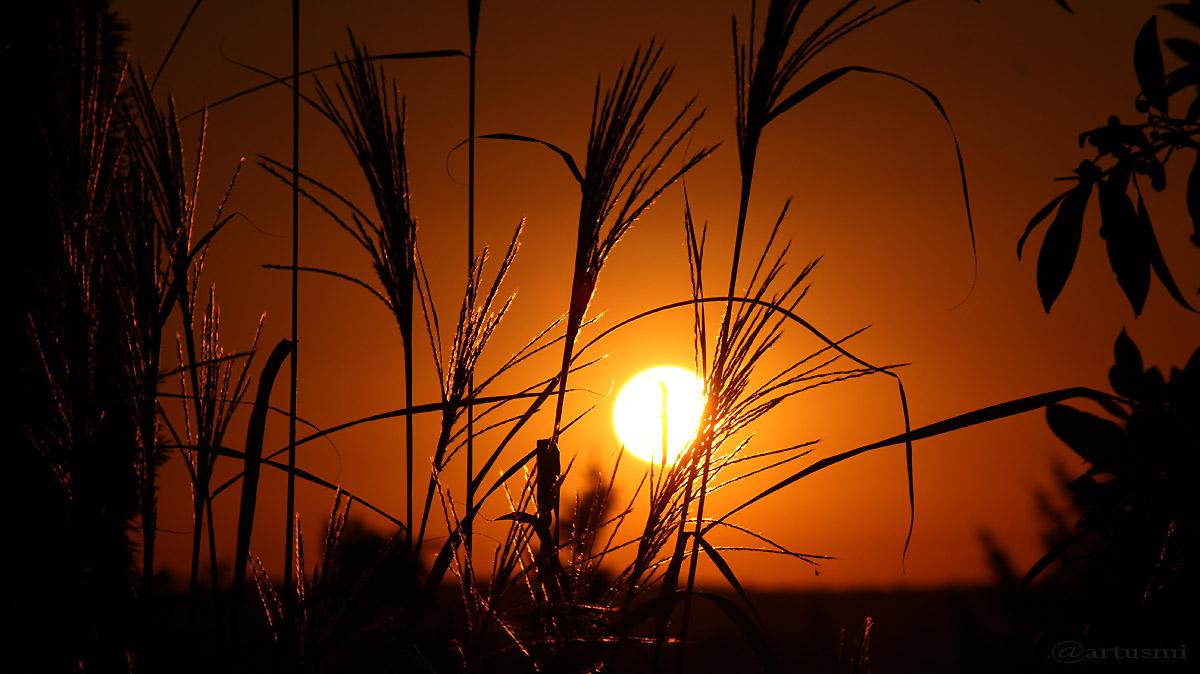 Silberfahnengras und untergehende Sonne am 29. September 2016 um 18:51 Uhr