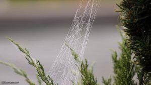 Spinnennetz - 16. Oktober 2016, 12:10 Uhr