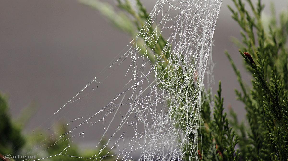 Natürliche Kunstwerke: Spinnennetze