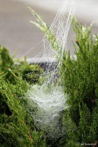 Spinnennetz - 16. Oktober 2016, 12:12 Uhr