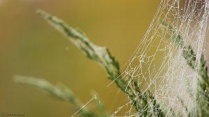 Spinnennetz - 16. Oktober 2016, 12:17 Uhr