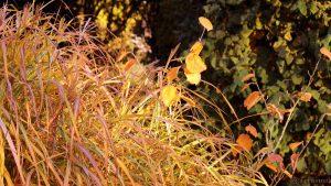 Herbstfarben in unserem Garten am 30. Oktober 2016 um 16:12 Uhr