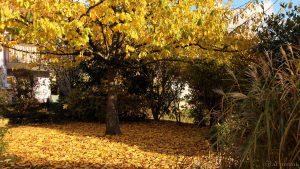 Unser Garten am 2. November 2016 um 15:25 Uhr