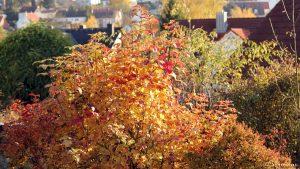 Herbstlaub - gesehen in Eisingen am 7. November 2016 um 15:11 Uhr