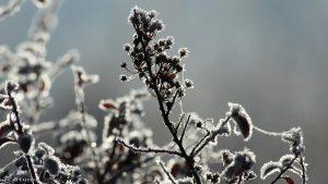 Pflanzen mit Raureif am 3. Dezember 2016 um 10:54 Uhr