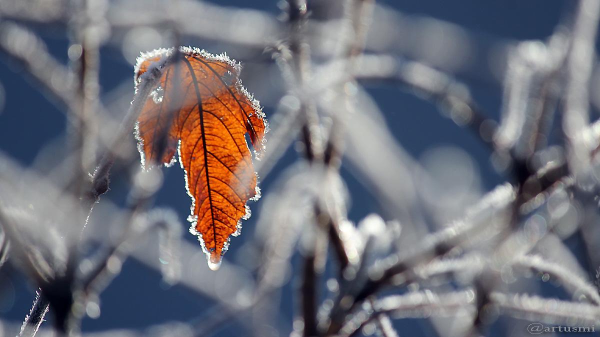 Raureif als optischer Ersatz für den ausbleibenden Schnee