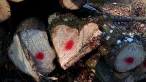 Baumstamm in Herzform - gesehen am 11. Februar 2017 um 15:30 Uhr