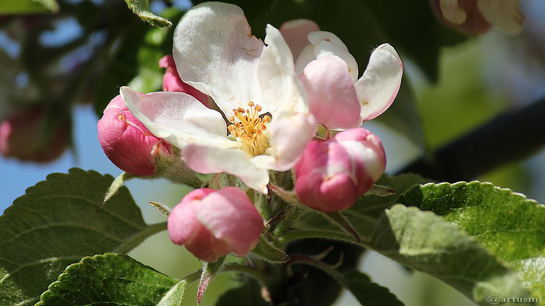 Aprilfrost sorgt nicht nur Obstbauern und Winzer