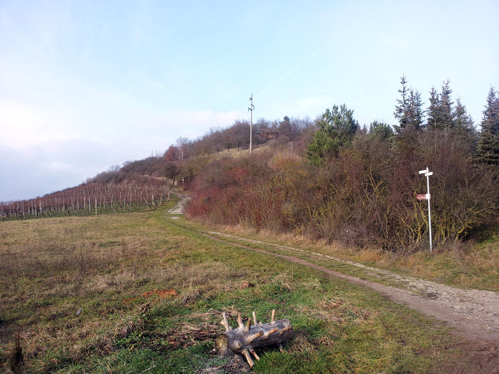 Panorama-Höhenweg bei Kleinochsenfurt