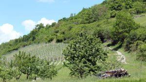 Panoramahöhenweg bei Kleinochsenfurt