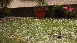 Taubeneigroße Hagelkörner nach schwerem Gewitter - 19. Juli 2017 um 20:46 Uhr