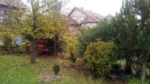 Unser Garten am 10. November 2017 um 13:12 Uhr