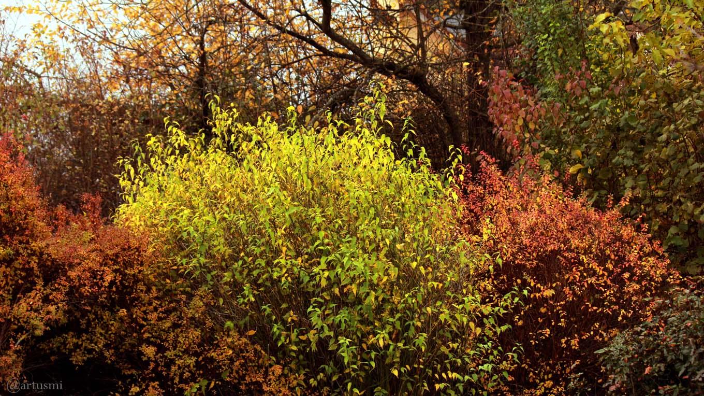 Herbstfarben in unserem Garten am 11. November 2017 um 10:17 Uhr