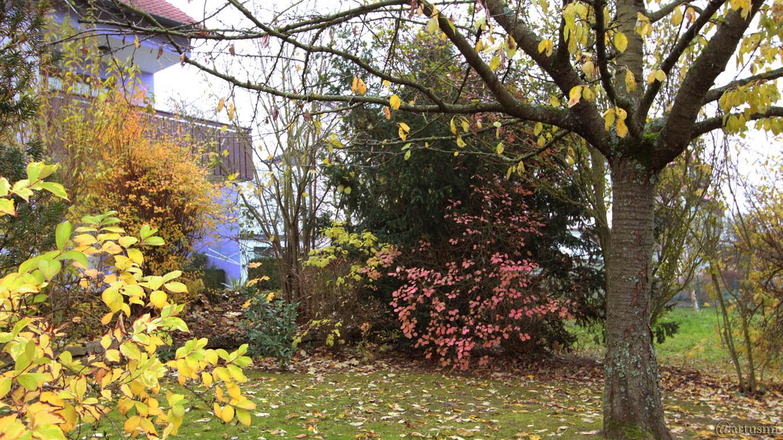 Unser Garten am 17. November 2017 um 08:29 Uhr