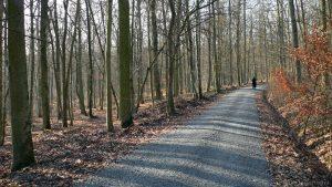 Waldweg bei Eisingen am 3. Januar 2009 um 12:36 Uhr