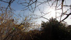 Der Frühling hält Einzug in Mainfranken - Unser Garten am 2. April 2018 (Ostermontag) um 16:37 Uhr