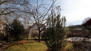Der Frühling hält Einzug in Mainfranken - Unser Garten am 2. April 2018 (Ostermontag) um 16:38 Uhr