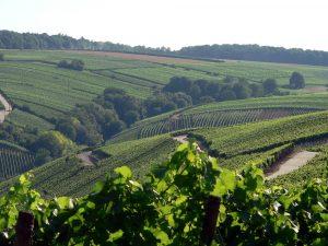 Weinberge unterhalb der Vogelsburg im Lkr. Kitzingen