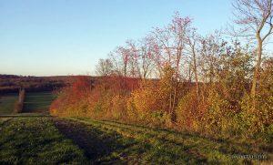 Herbstfarben in der Flur bei Hettstadt im Lkr. Würzburg