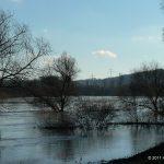 Hochwasser am 16.01.2011 bei Goßmannsdorf.