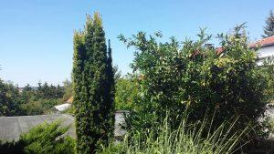 Unser Garten am 6. August 2018 um 12:18 Uhr