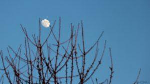 Zunehmender Mond am 16. Februar 2019 um 17:21 Uhr am Osthimmel