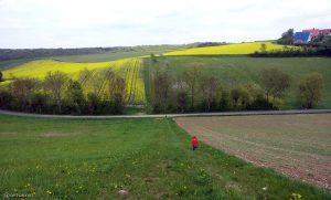 Rapsfelder am 2. Mai 2015 am Alten Hettstadter Weg in Eisingen