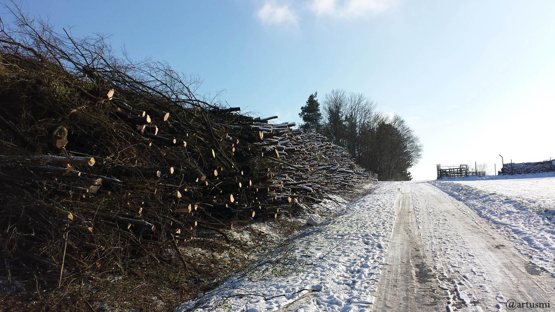 Baumfällungen und Schnittmaßnahmen ab 1. März bis zum 30. September verboten
