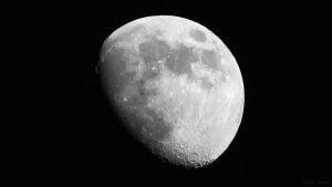 Goldener Henkel am 14. Mai 2019 um 21:09 Uhr am zunehmenden Mond