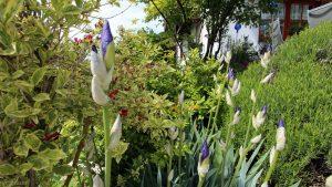 Unser Garten am 15. Mai 2019