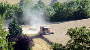 Getreideernte in Eisingen am 24. Juli 2019 bei 36 °C